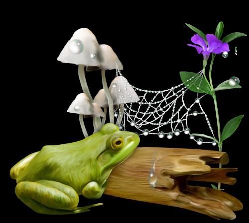 Les grenouilles 7842f8cd