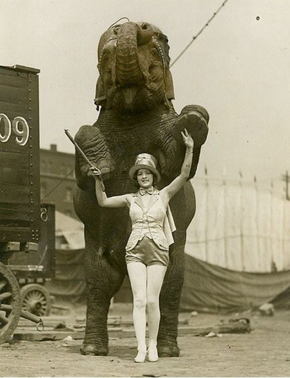 Le cirque ... D86f5a42